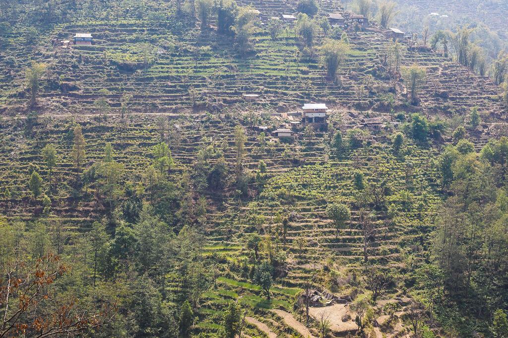 Kanchenjunga North - Back to Suketar
